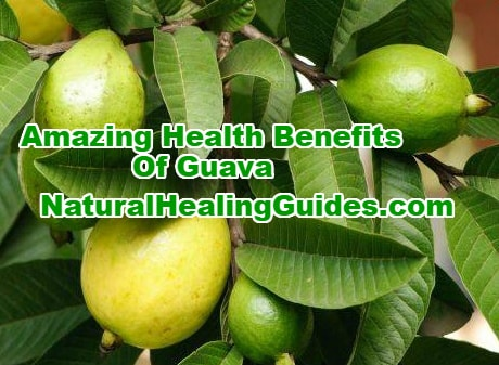 health benefits of guava seed juice