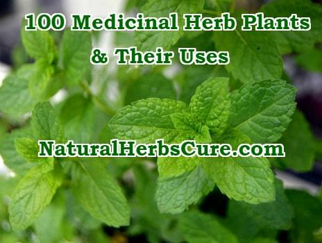 100 medicinal herbs plants uses