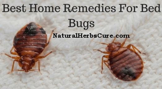 best home remedies killing bed bugs instantly
