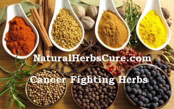 cancer healing herbs teas supplements