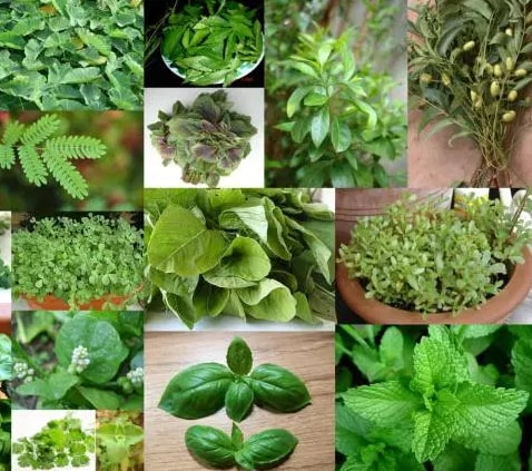 herbal medicines and their uses with pictures