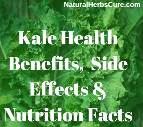 kale health benefits side effects nutrition facts