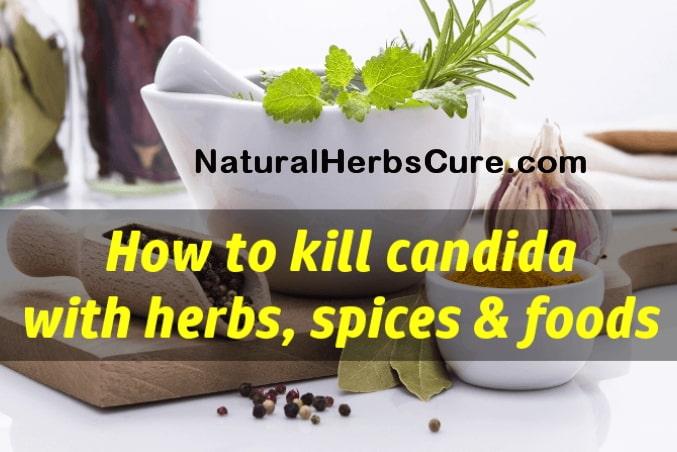 antifungal herbs food cure candida naturally