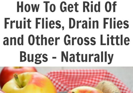 how to get rid fruit flies fast naturally