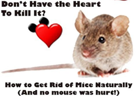 mice removal infestation home remedies