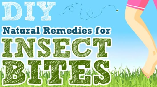 how to treat insect bug mosquito bites naturally