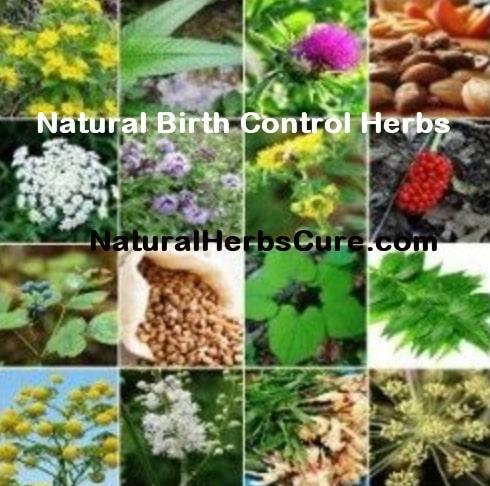 natural birth control herbs