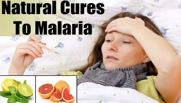 natural cures malaria